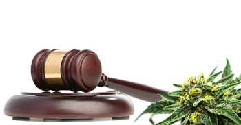 Cannabis Litigation Update: United Cannabis Corp v Pure Hemp Collective Inc.